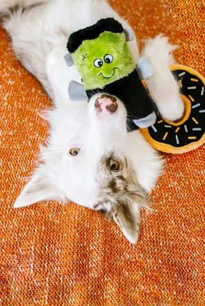 Halloween-Dog-Toys-TITLE-295x440